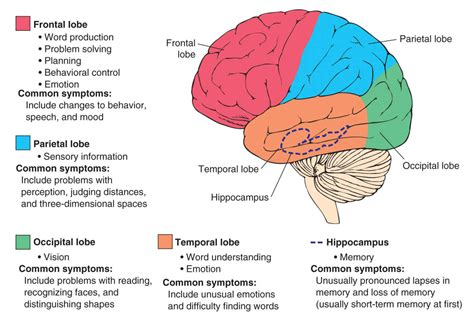 dementia symptoms the scope of dementia variants symptoms stages and causes neupsy key
