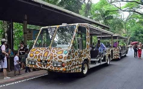 Singapore Zoo With Tram Ride Child singapore zoo information animals shows ticket