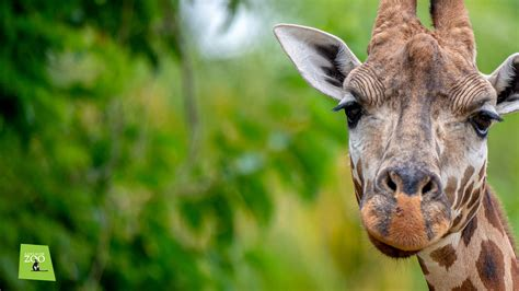 animal backgrounds zoos sa