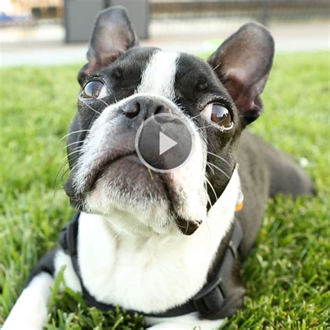 do dogs whiskers why do dogs noses and whiskers
