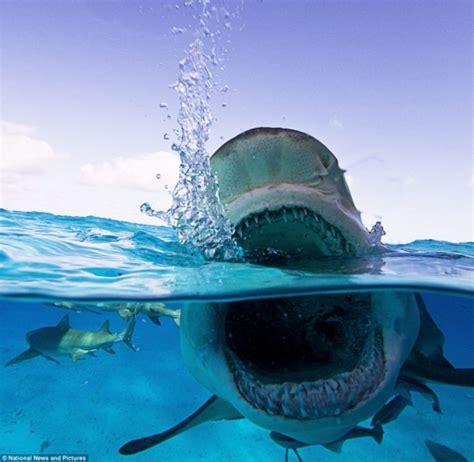 imagenes impresionantes del oceano primer plano del tibur 243 n m 225 s aterrador del oc 233 ano fotos