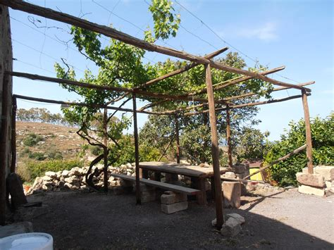 come coltivare l uva da tavola coltivare la vite di ilprim 242 orto
