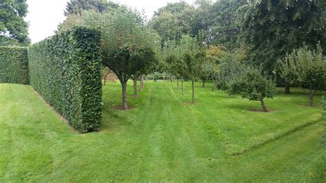 Orchard Garden by Sussex Garden Care Parkfield Landscapes