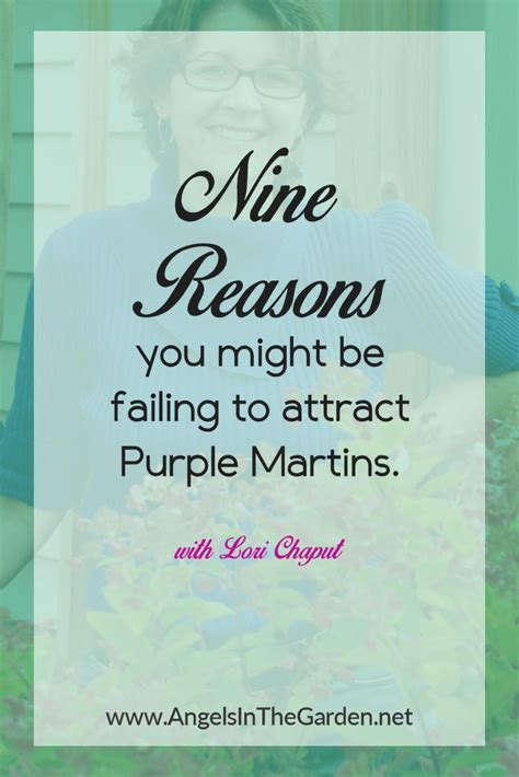 9 Reasons Your Diet May Fail by Best 25 Purple Martin Ideas On May Martin
