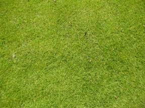 astro turf image after photos tabus grass astroturf green blades