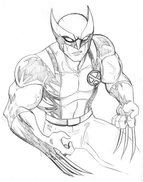 drawings of drawings of wolverine wolverine drawing images