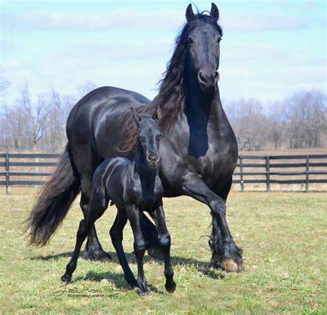 Imagenes Surrealistas De Caballos | image gallery imagenes de caballos