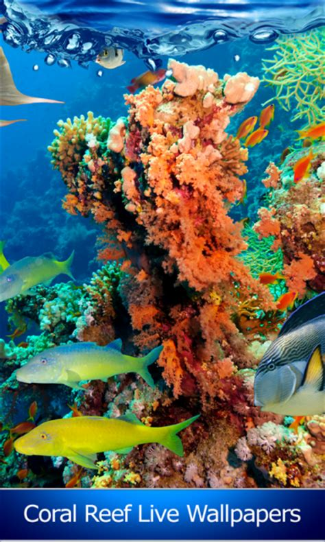 coral apk coral reef live wallpapers apk for android aptoide