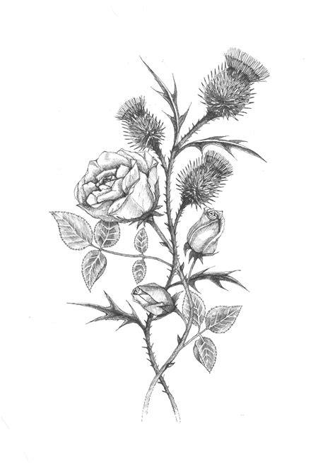 rose and thistle tattoo scottish ancestry ideas