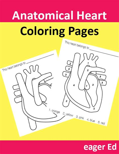 coloring pages heart health 91 best images about homeschooling on pinterest abstract