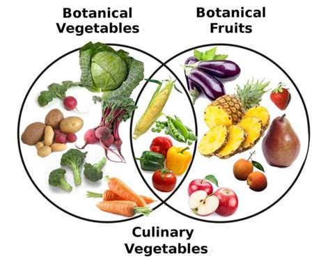 fruit vs vegetable fruit vs vegetable difference pictures to pin on