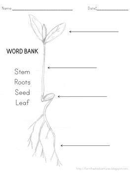 7 best Plants images on Pinterest | Kindergarten science