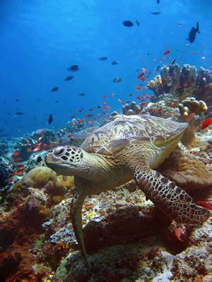 underwater tutorial photoshop cs5 learn free online photoshop retouching underwater photos