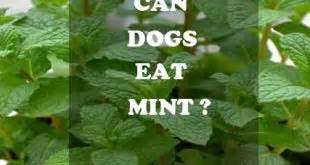 can dogs eat jicama best lasting chews keep your busy and healthy alldogsworld