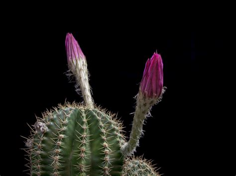 imágenes bellas en movimiento flores bonitas con movimiento para facebook im 225 genes gif