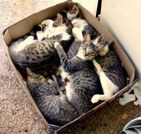 8 Reasons Why Cats Are Like Children by Why Do Cats Boxes 12 Facts About Cat In The Box You