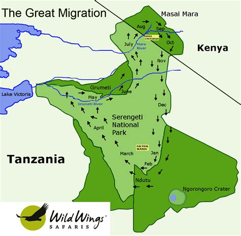 on the wing travels with the songbird migration of books greater serengeti migration area tanzania
