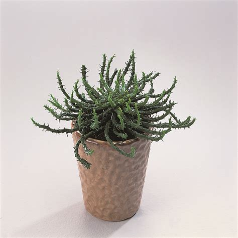medusa planter floradania marketing plants