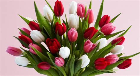 tulips or roses for valentines the history of s day why we send flowers