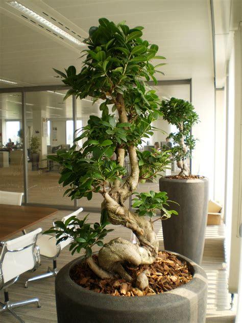 office plant decoration kl office plants rental plants