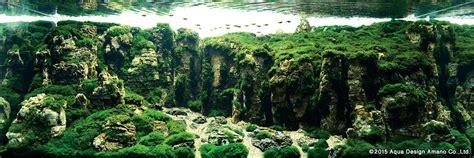 Ada The International Aquatic Plants Layout Contest 2015 iaplc winning works 2015 news