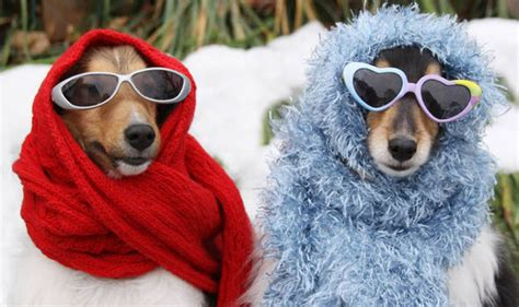 dogs in clothes owners slammed for dressing pets in clothes nature news express co uk