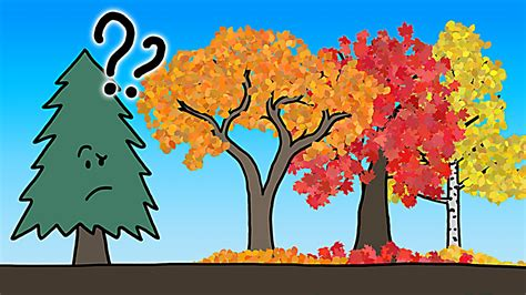 how do leaves change color the real reason leaves change color in the fall