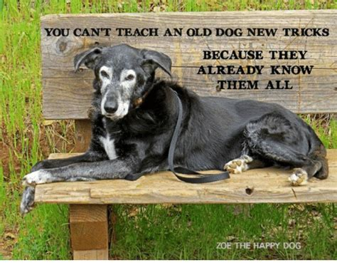 you can t teach an new tricks 25 best memes about dogs new tricks dogs new tricks memes