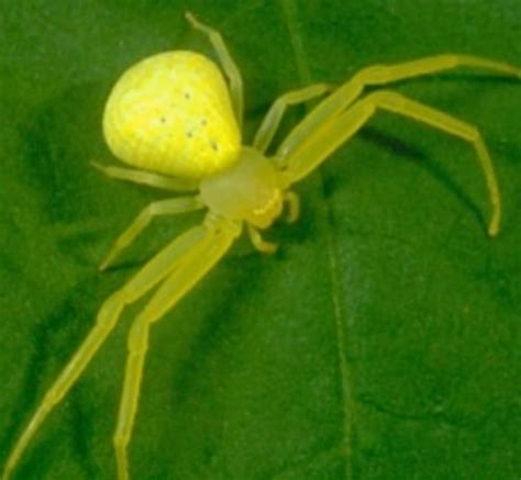 Garden Spider Ky Science Weekly