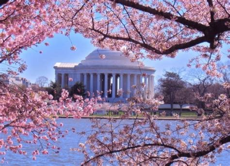 eliza s cherry trees district of columbia library