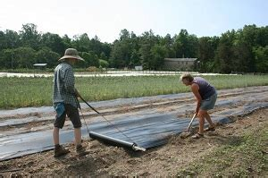 how to lay biodegradable plastic mulch by hand organic