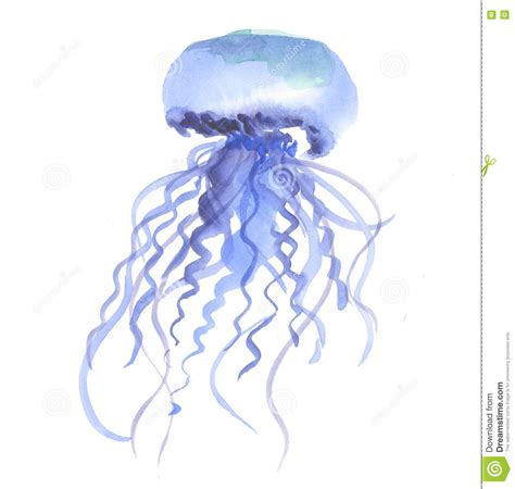 Handmade Jellyfish - isolated blue jellyfish watercolor illustration stock