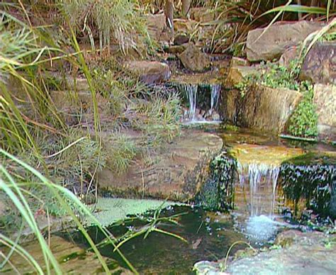 Australian National Botanic Garden 167 Beste Afbeeldingen Australi 235 Op Australi 235 Dag Groot Barri 232 Rerif En Australi 235
