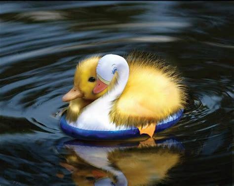 how to your to retrieve ducks duck photo by ladyerisa666 photobucket