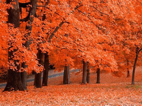 gambar pemandangan musim gugur   indah