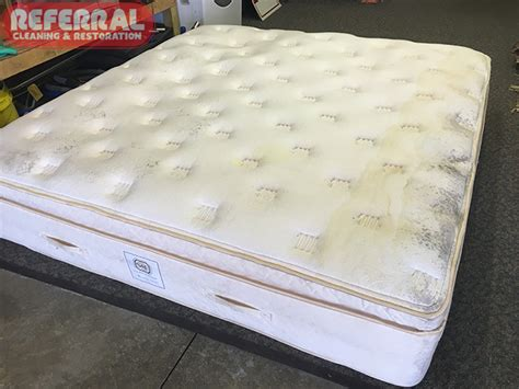 Water Stain On Mattress by Cleaning Photos Fort Wayne In Referral Cleaning