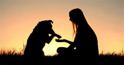 emotional support animal housing laws 2 ironclad emotional support animal laws