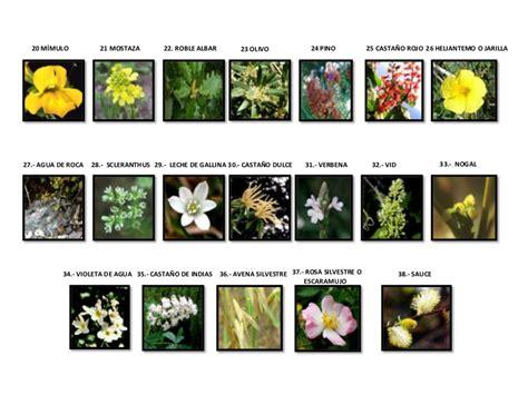 imagenes flores silvestres sus nombres flores de bach