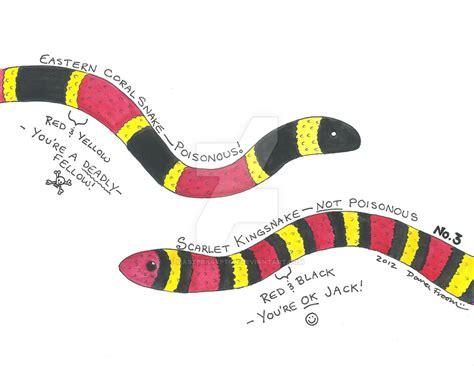 vs snake king snake vs coral snake www pixshark images galleries with a bite