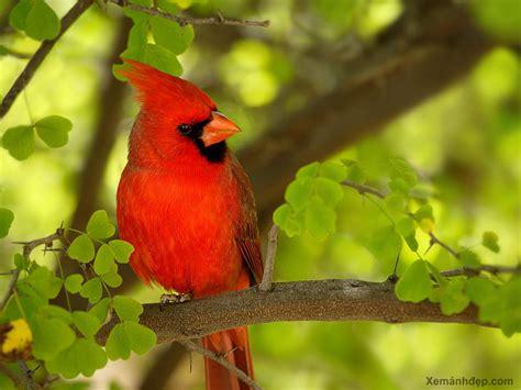 beautiful birds phots beautiful bird photos birds pictures xemanhdep photos awesome pictures gallery