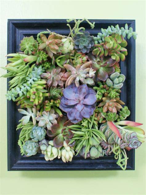 succulent garden shadowbox diy