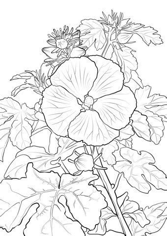 yellow hibiscus coloring page pua aloalo or hawaiian hibiscus coloring page free