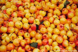 yellow cherries flickr photo sharing