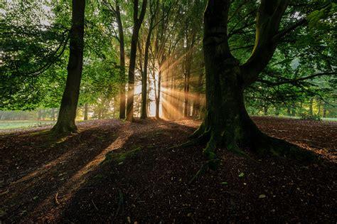 wallpaper pemandangan hutan pohon sinar matahari