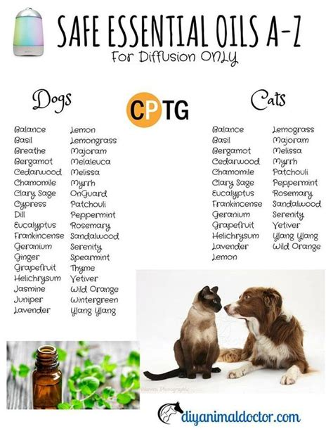 20 point quality checklist for buying essential oils essentials oil and dog