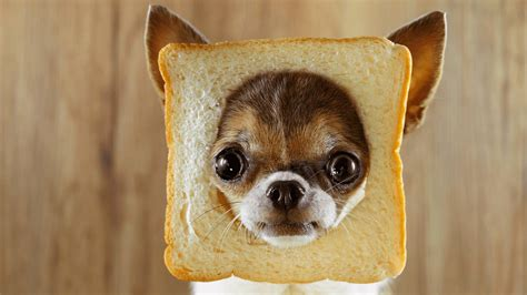 bread puppies can dogs eat bread which bread is toxic for dogs