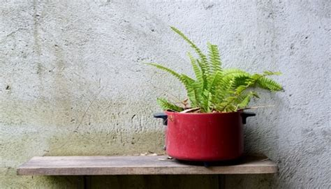 cubicle plants 8 cubicle friendly plants to green your workspace