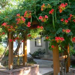 most beautiful gardens gt pergola plants for a beautiful