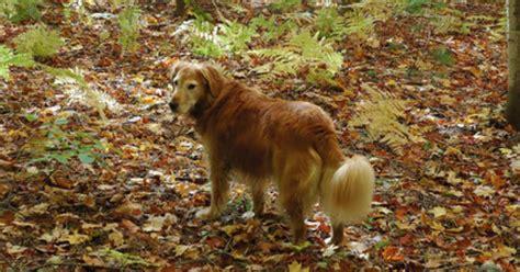neurological problems in dogs neurological symptoms of lyme disease in dogs ehow uk