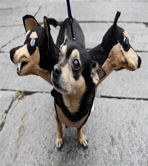 best pet dogs 20 of the best costumes you will see